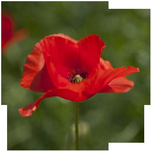 Ferienwohnung Blume, Ferienwohnungen Lennetal